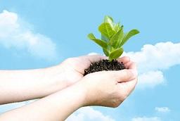 企業を成長させる「雨が降ったら植える種」